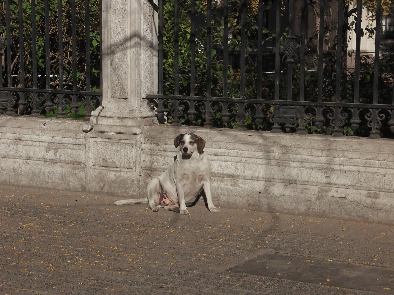 Parliament library street dog